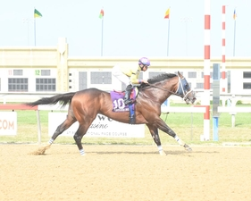 Call Paul Danzig Stakes B D photo
