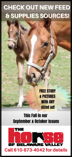 Equine Feed & Supplies Promo Ad