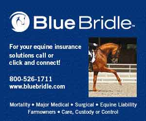 Blue Bridle Insurance