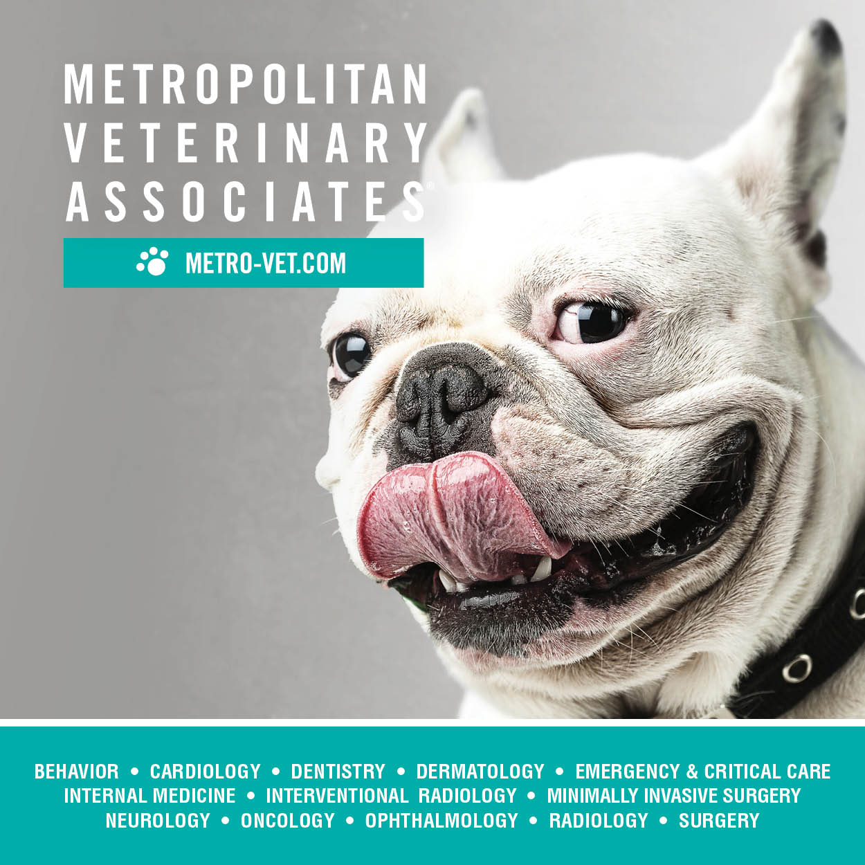 Metro Veterinary Assoc