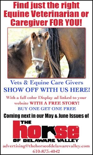 Equine Vet Promo Ad