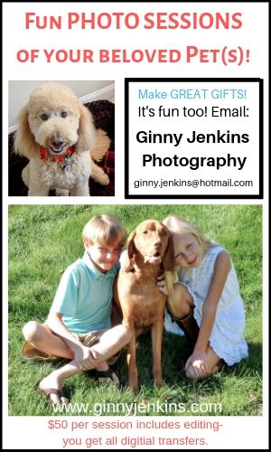 Ginny Pet Portraits