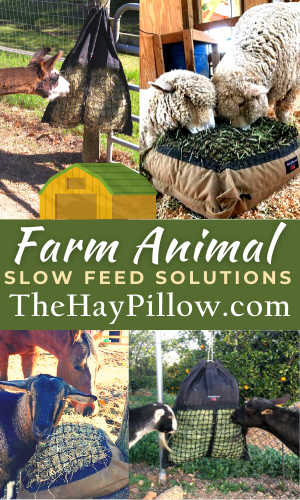 Hay Pillow-300x500