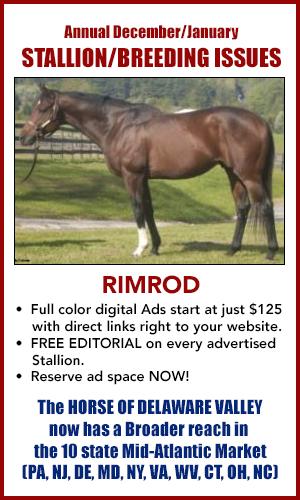 Stallion Promo Ad