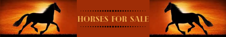 Horses For Sale banner