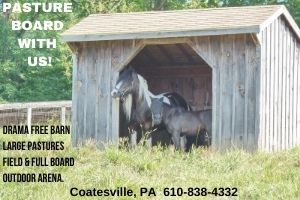 Horse Stable Available