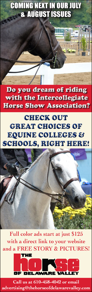 Equine Education 2020