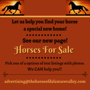 Horses For Sale Promo Ad