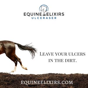 equine elixirs