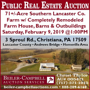 Beiler Campbell Auction