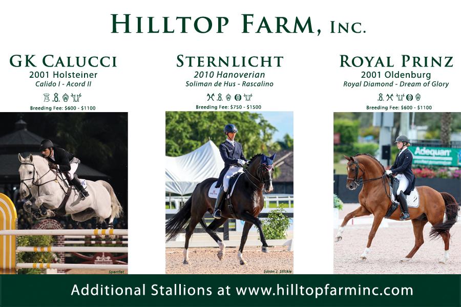 Hilltop Stallion Ad