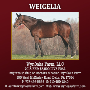 Wyn Oaks Farm Weigelia
