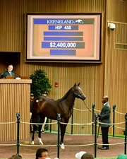 Hip 458 2.4 Million War Front Colt