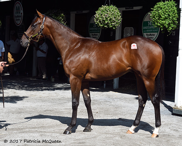 Hip number 26 a bay colt by Union Rags
