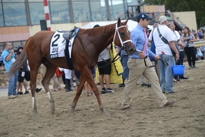 Monomoy Girl being walked around in front of the winners circle